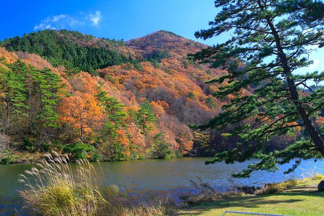 大山 大野池 紅葉