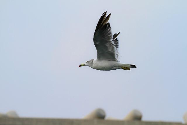 鳥取ジオパーク 浦富海岸