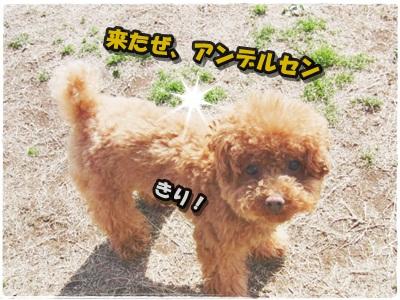 20110327-052.jpg
