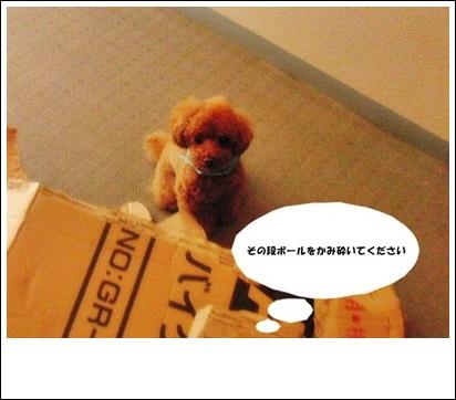 20110521-CIMG3298.jpg