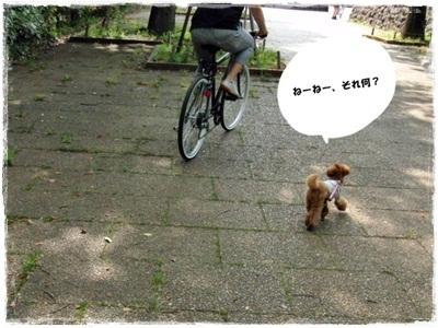 20110521-CIMG4683.jpg