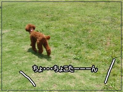 20110523-1171.jpg