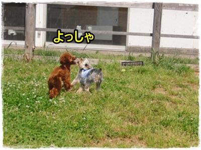 20110528-388.jpg