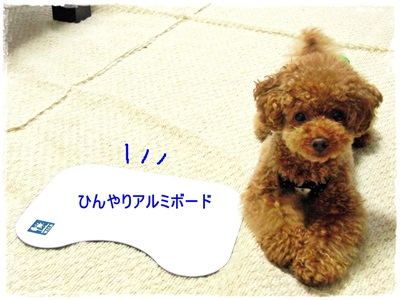 20110708-CIMG3256.jpg