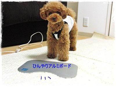 20110708-CIMG3353.jpg