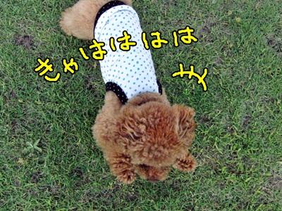 20110710-CIMG5007.jpg