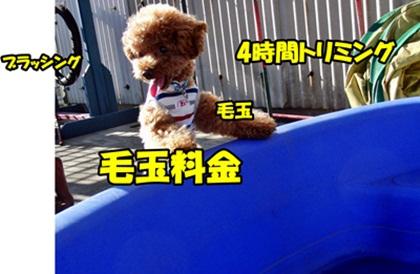20110710-CIMG5191.jpg