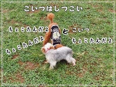 20110919-2724.jpg