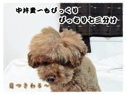 20111107-345.jpg