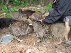 猫おじさんと7匹の仲間たち