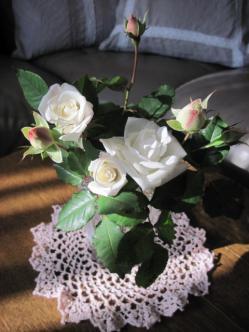 ピンクがかった蕾も開花すると真っ白になります