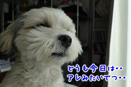 107_2.jpg