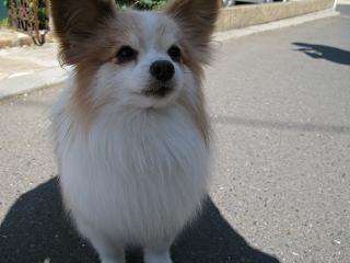 アイドル犬