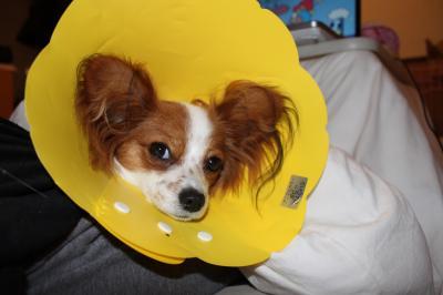 避妊手術後