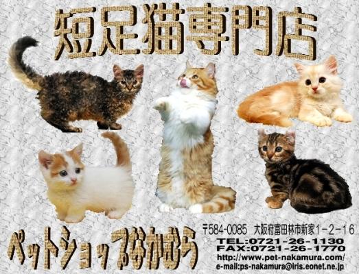 なかむらポスター