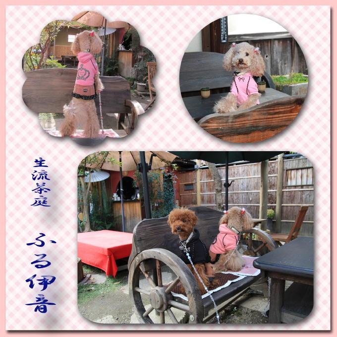 10_20101206130517.jpg