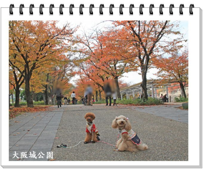 15_20101127223509.jpg