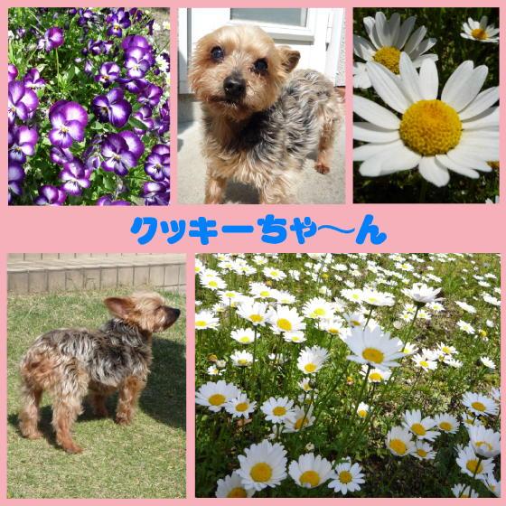 2_20100513210200.jpg