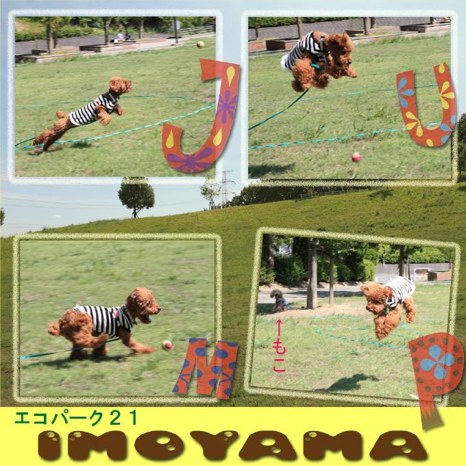 5_20101012101747.jpg