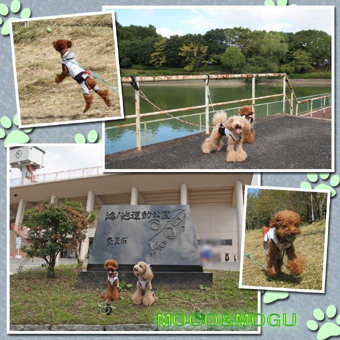 5_20101017134908.jpg