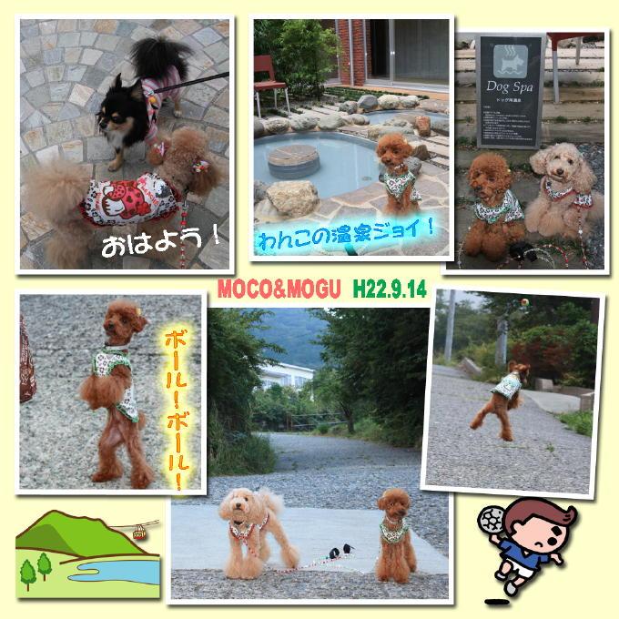 6_20100928204207.jpg