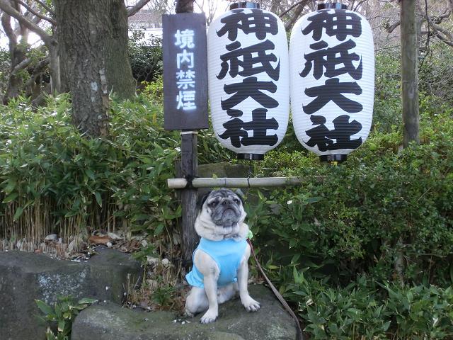 伊豆高原2012.03.24 (95)