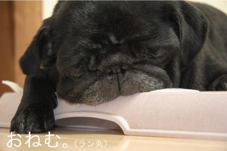 2011.9.6.1ラン丸