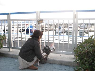 マリーナから海を眺めるぷうこ氏