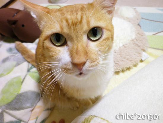 chiba13-01-102.jpg