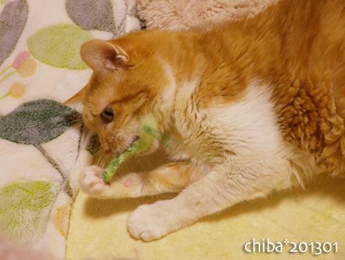 chiba13-01-188.jpg