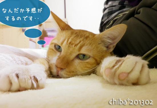 chiba13-02-102.jpg