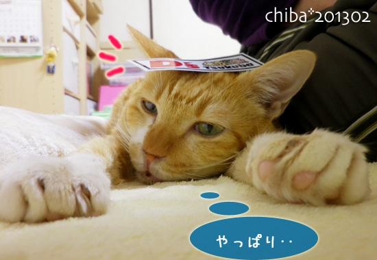 chiba13-02-103.jpg