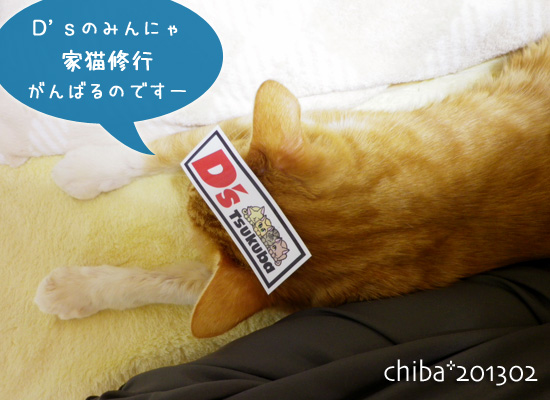 chiba13-02-104.jpg