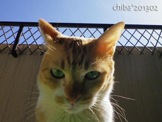 chiba13-02-134.jpg