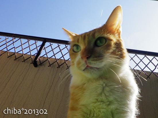 chiba13-02-137.jpg
