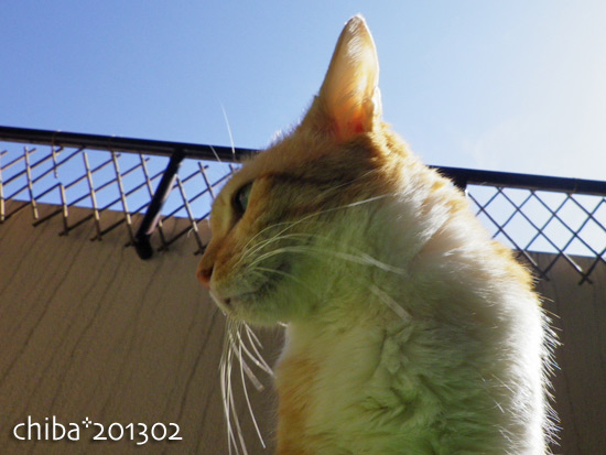 chiba13-02-139.jpg