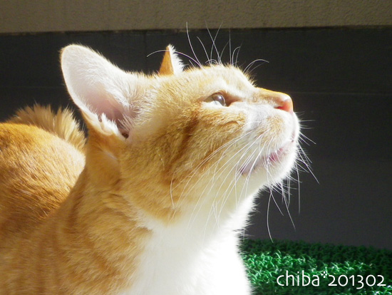 chiba13-02-22.jpg