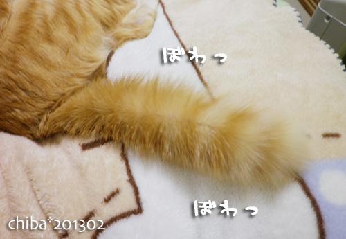 chiba13-02-35.jpg