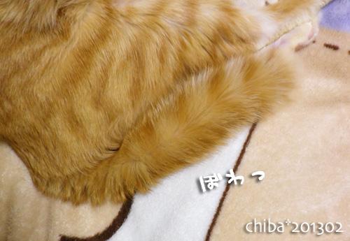 chiba13-02-36.jpg