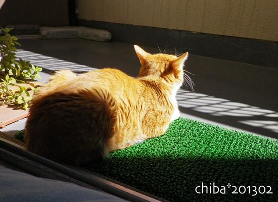 chiba13-02-79.jpg
