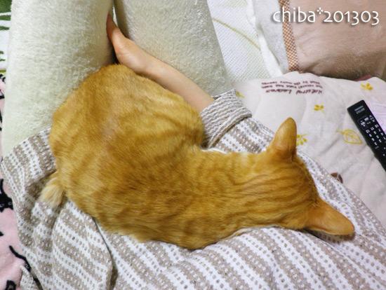 chiba13-03-51.jpg