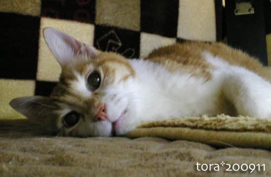 tora09-11-130.jpg
