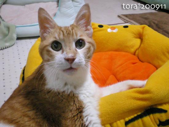 tora09-11-147.jpg