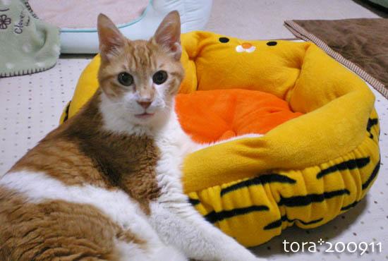 tora09-11-151.jpg