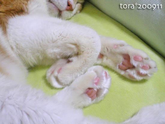 tora09-11-44.jpg