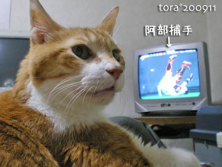 tora09-11-90.jpg