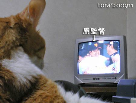 tora09-11-92.jpg