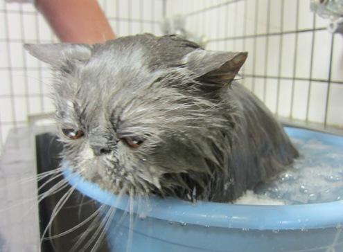 4)お風呂に入れない人たちをふと思う