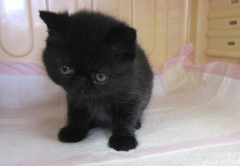 5)イチの子猫①