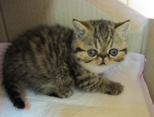 6)イチの子猫②